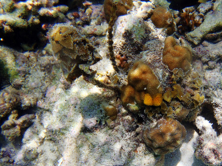 gilled: Christmas Tree Worms and corals