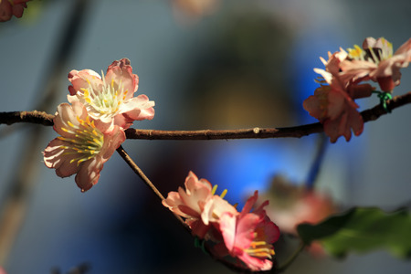glimmering: flower exotic flower of Asia