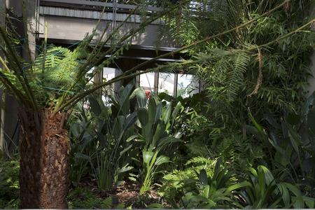 plant at angola pavillion EXPO, Milan photo