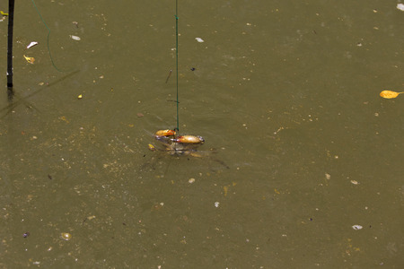 caught: Crab caught