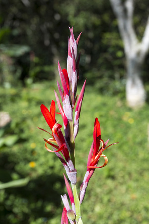 blue romance: bright red orchids in Cuba