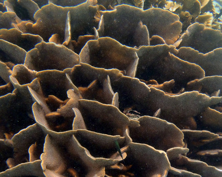 polyp corals: Coral close up in Cambodia sea