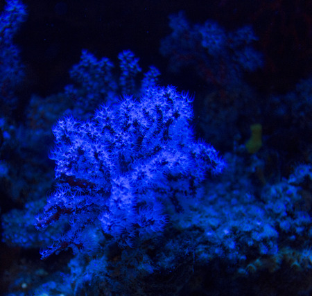 sunspot: tropical coral under blue light Stock Photo