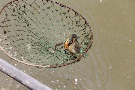 south east asia: Fishing crabs in South East Asia