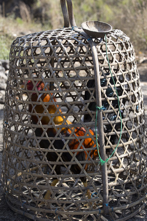 the game cock in cage, Bali Stock Photo