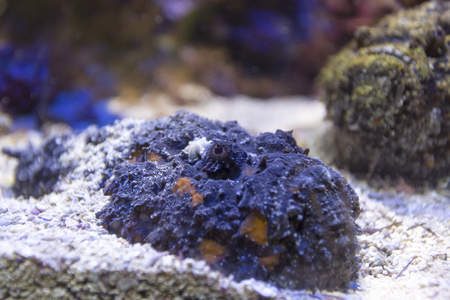 scorpionfish: scorpionfish tries to blend into the background