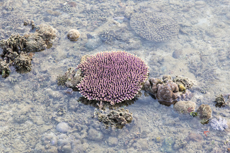 Coral reef in low tide, Indonesia