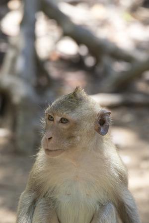 Little baby-monkey in monkey forest of Ubud, Bali, Indonesia Stock Photo
