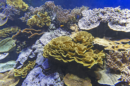 hard coral: coral reef with soft and hard corals with exotic fishes