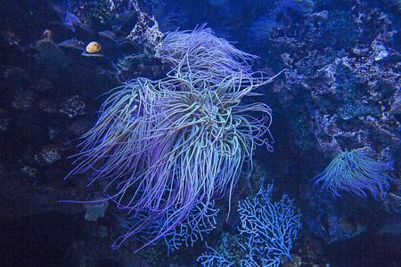 Beauty of the undersea world, sea anemones Stock Photo
