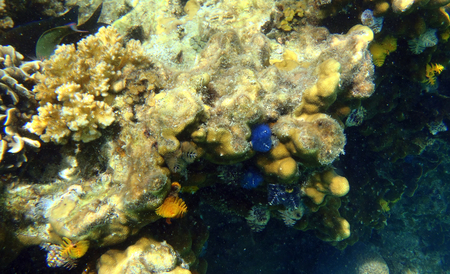 Christmas tree worm in South East Asia  Banque d'images