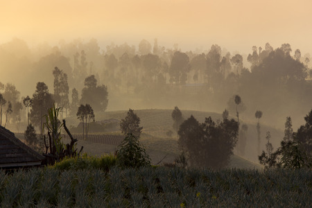 fog in the morning at sunrise, Indonesia Stock Photo