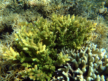 colorful seaview with acropora corals and fishes Stock Photo
