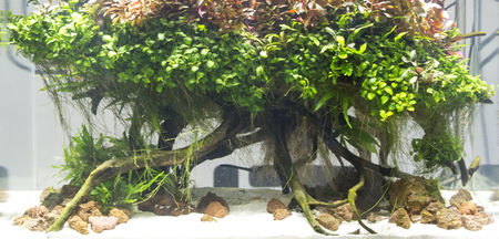 Beautiful planted aquarium close view