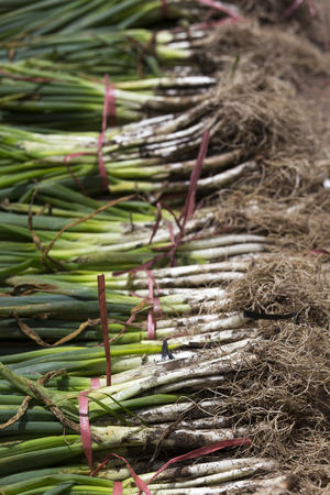 scallions at market in Sulawesi, Indonesia