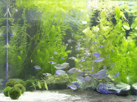 Beautiful freshwater planted aquarium, overview