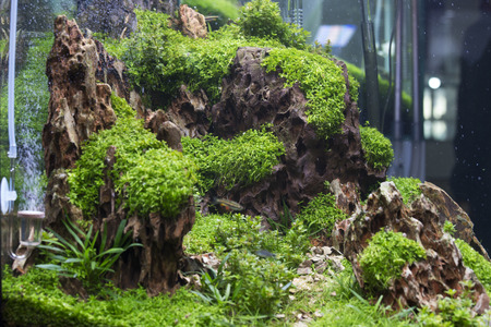 freshwater aquarium plants: Planted Freshwater Aquarium close up view