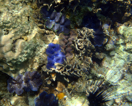 Coral reef in Sulawesi