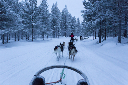 dogsledding in Lapland during polar night Banco de Imagens - 92869993