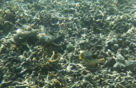 Dog fish swimming in the reef of Indonesia