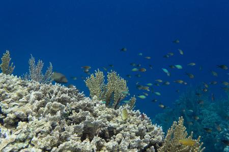 Impressive biodiversity in the reef near Togian islands, Sulawesi, Indonesia