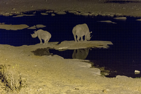 couple of white rhinos at night in namibia