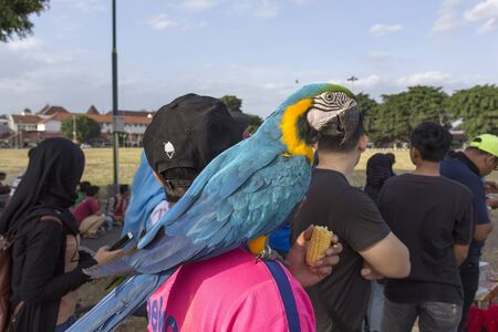 Yogyacarta, Indonesia - August 03, 2017: group of person in town with a big parrot