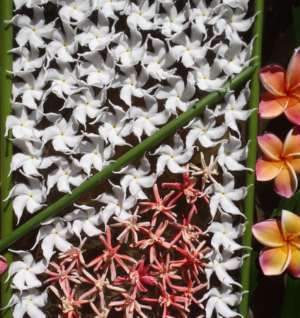 plumeria decoration on water in Thailand Stock Photo