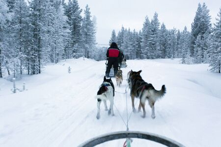 Saariselka, Finland - December 30, 2017: dogsledding in Lapland during polar night