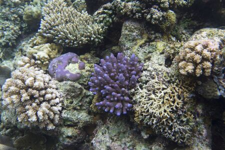 Coral reef in the Togian islands, Indonesia