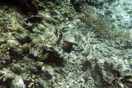 view of tropical fishes in Seychelles sea Фото со стока