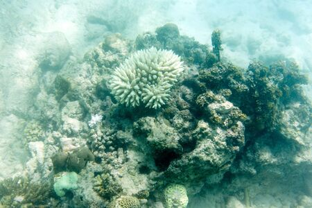 white and endangered corals in Seychelles coral reef 写真素材