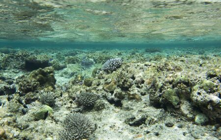 A coral reef scene taken in New Caledonia