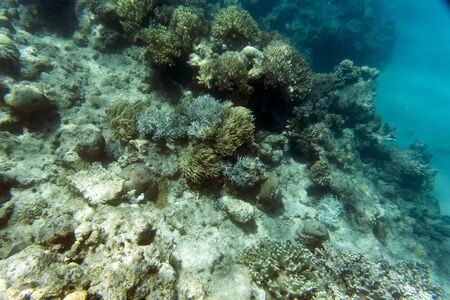 Beautiful corals in the reef of New Caledonia