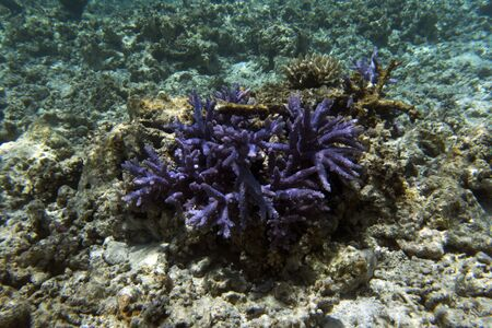 Acropora coral view in the sea of New Caledonia