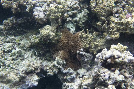 View of beautiful corals in New Caledonia