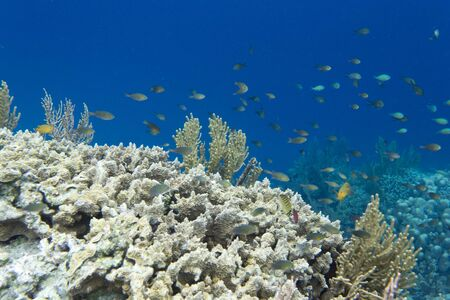 Coral reef with many animals in Togian islands, Indonesia Stockfoto