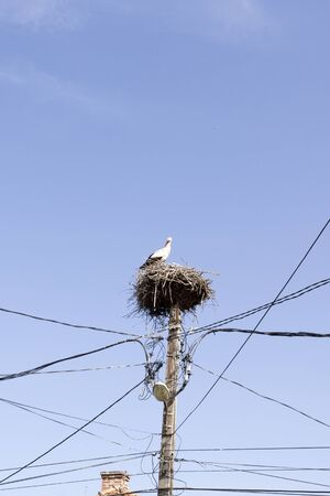 A picture of a stork bird in Romania