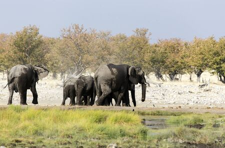 Photo of an elephant herd in Namibia