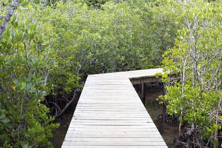 view of a pier in a mangrove swamp
