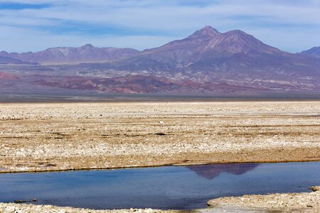 A landscape at lagoon Chaxa in Chile