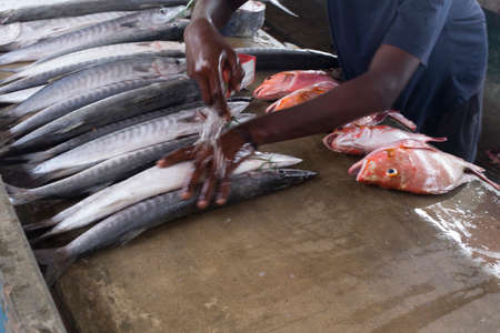 Victoria, Seychelles - April 29, 2019: man at fish market is preparing fishes exposition Redactioneel