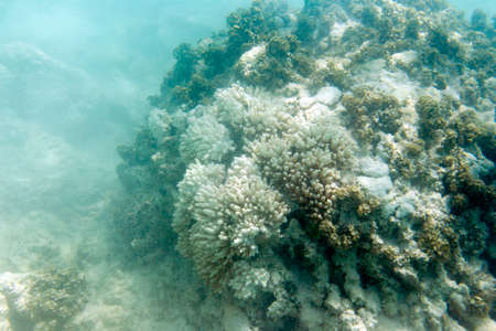 Many bleaching coral in the sea of Seychelles