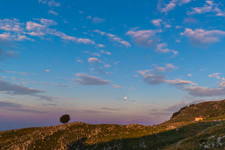 Isolated tree / Mount Pizzoc in the plateau of Cansiglio at dawn 스톡 콘텐츠