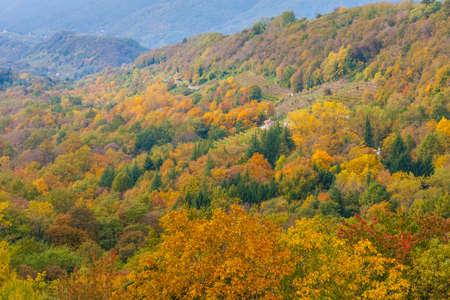 The spectacular colors of autumn / Trevigiani hills / Veneto Region