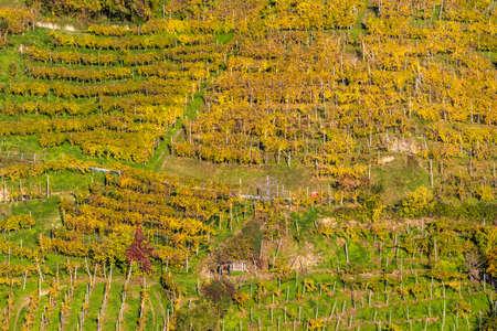The Prosecco Hills in the Veneto region in autumn