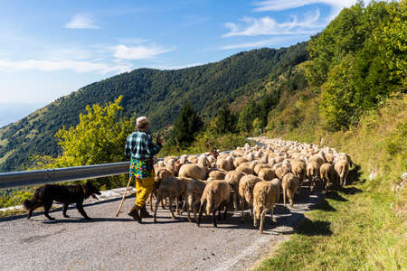 Mount Grappa in Italy / Transhumance