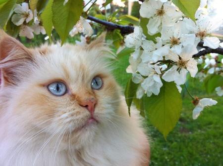 eye: The cat Stock Photo