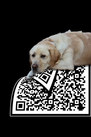 The qr code to trust photo