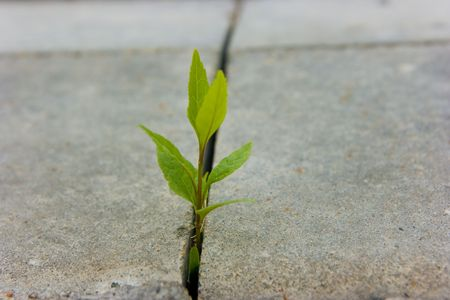 growing green sprout on the pavement Stock Photo